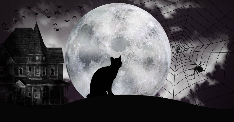 Halloween Black Cat Looking at the Moon