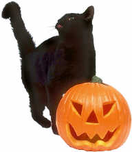 black cat and jackolantern