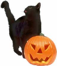 black cat and jackolantern